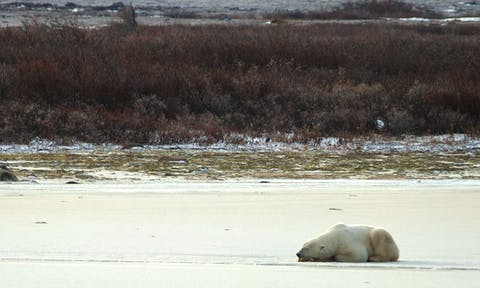 Bear on Beach