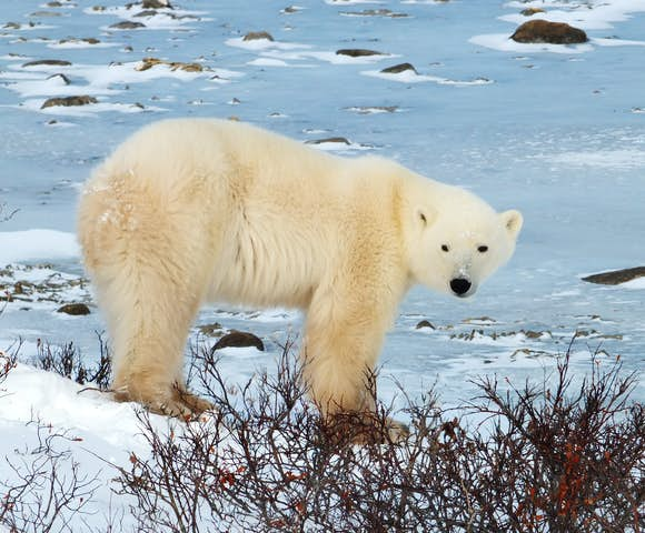 Cruises to the Canadian Arctic