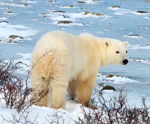 Adventures in the Arctic