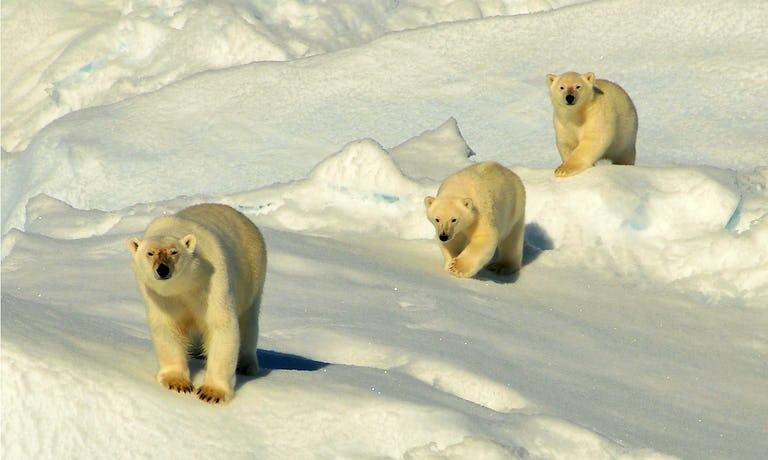 Spitsbergen Circumnavigation