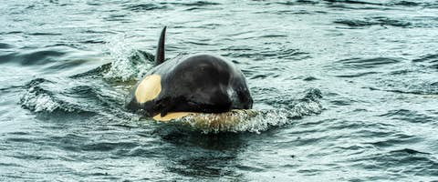 Arctic Whale Watching Tours