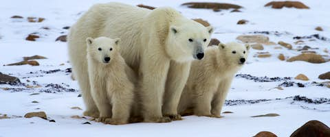 Churchill Polar Bear Adventure: Tundra & Town
