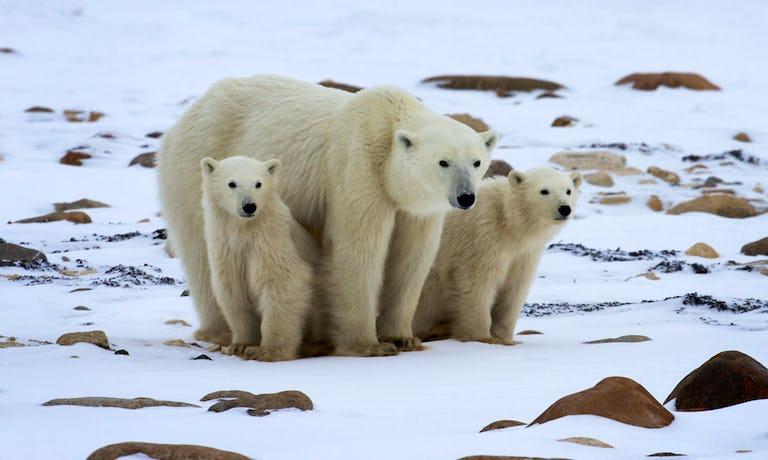 Ice Bear Tundra Lodge Adventure
