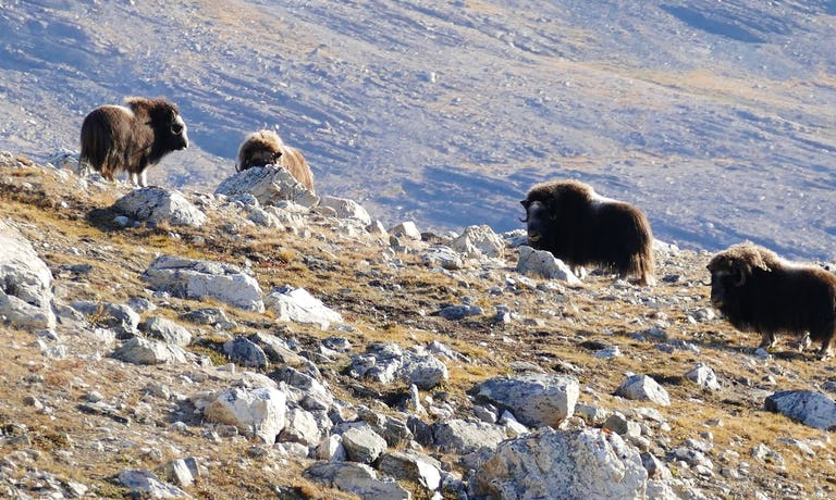 Big Ice & Vikings in West Greenland
