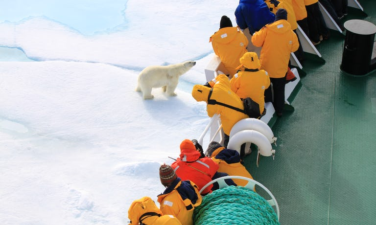 Svalbard Wildlife In-Depth