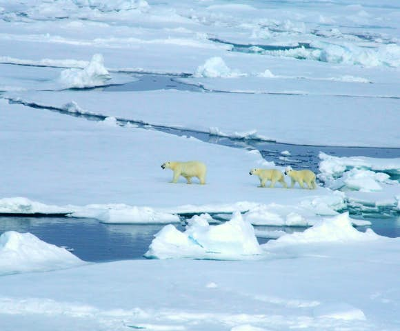 Cruises & expeditions to the North Pole