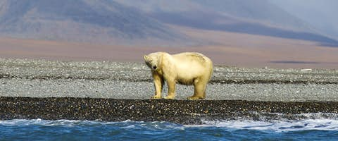 Chukotka and Wrangel Island Explorer