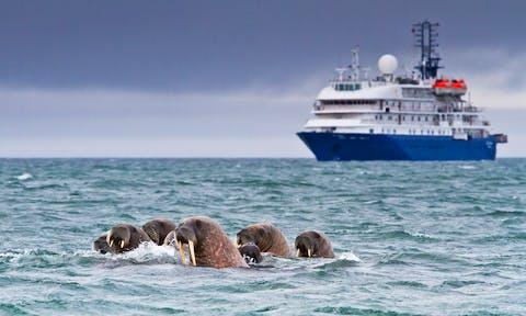 walrus ship